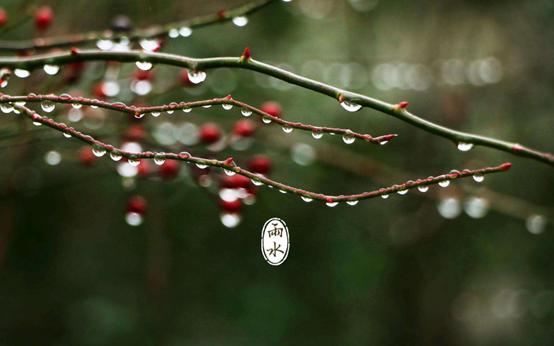 今日【雨水】:春风化雨,万物皆清明